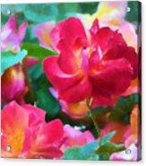 Rose 354 Acrylic Print