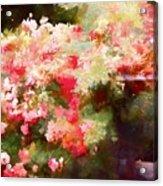 Rose 375 Acrylic Print