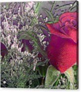 Rose And Babies Breath Acrylic Print
