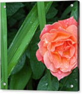 Rose And Day Lily Lives Acrylic Print