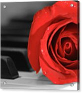 Rose And Piano Acrylic Print