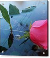 Rose And Water. Acrylic Print