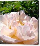 Rose Art Prints Canvas Sunlit Pink Rose Garden Baslee Troutman Acrylic Print