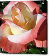 Rose Artwork Floral Pink White Roses Baslee Troutman Acrylic Print