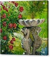 Rose Bath Acrylic Print