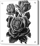 Rose Black Acrylic Print