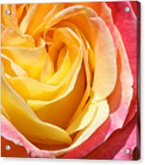 Rose Bloom Acrylic Print