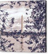 Rose Blossom Monument Acrylic Print