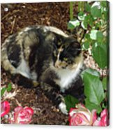 Rose Bower For A Cat Acrylic Print