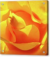 Rose Bright Orange Sunny Rose Flower Floral Baslee Troutman Acrylic Print