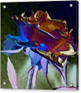 Rose By Design Acrylic Print