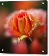 Rose Centerpiece Acrylic Print