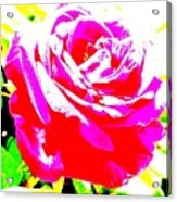 Rose Acrylic Print by Dana Patterson