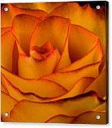 Rose Edge  Acrylic Print