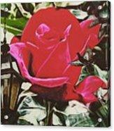 Rose Evening,oil Acrylic Print
