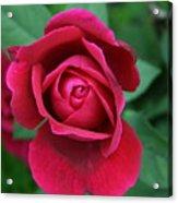 Rose Eye Acrylic Print