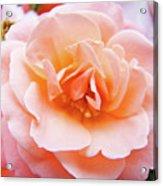 Rose Floral Art Print Peach Pink Roses Garden Canvas Baslee Troutman Acrylic Print