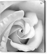 Rose Flower Black And White Monochrome Acrylic Print