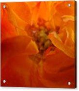 Rose Flower Orange Glowing Rose Giclee Baslee Troutman Acrylic Print