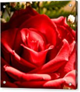 Rose For My Valentine Acrylic Print by Thomas R Fletcher