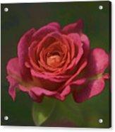 Rose Fragrance Acrylic Print