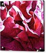 Rose Fresco Acrylic Print