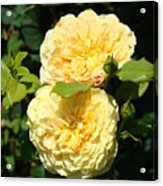 Rose Garden Floral Art Print Yellow Roses Canvas Baslee Troutman Acrylic Print