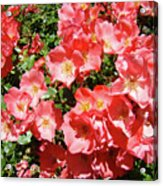 Rose Garden Pink Roses Botanical Landscape Baslee Troutman Acrylic Print