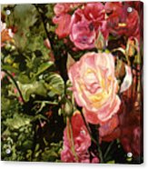 Rose Garden Acrylic Print by Teri Starkweather