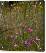 Rose Gentian With Brown Eyed Susans Acrylic Print