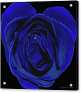 Rose Heart In Blue Velvet Acrylic Print