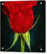 Rose - Id 16236-105012-4033 Acrylic Print