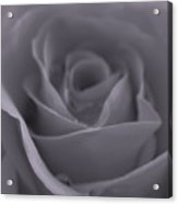 Rose In Black And White  Acrylic Print