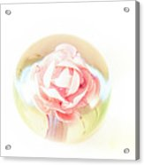 Rose In Glass Acrylic Print