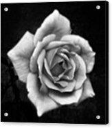 Rose In Mono. #flower #flowers Acrylic Print