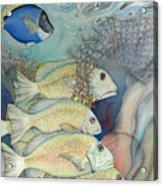Rose Island II Acrylic Print by Liduine Bekman