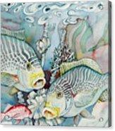 Rose Island IIi Acrylic Print