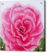 Rose Acrylic Print by Joni McPherson