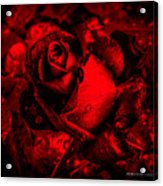 Furious Rose Magic Red Acrylic Print