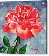 Rose Acrylic Print