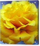 Rose Moss Flower Acrylic Print