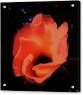 Rose Of Sharon Orange On Black Acrylic Print