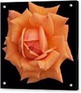 Rose On Black Velvet Acrylic Print