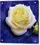 Rose On Blue Acrylic Print