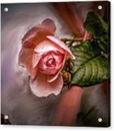 Rose On Paint #g5 Acrylic Print