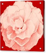Rose On Red Acrylic Print