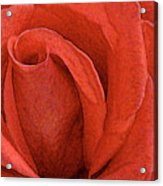 Rose-paintdaubs-2 Acrylic Print