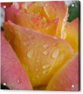 Rose Peace Acrylic Print