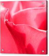Rose Petals - 2 Acrylic Print