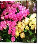 Rose Photoposter Acrylic Print